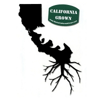 A401 - California Bear Roots Color Decal
